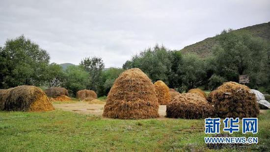 东峪村刚刚收完麦子,有序堆放的秸秆,今年又是个丰收年。