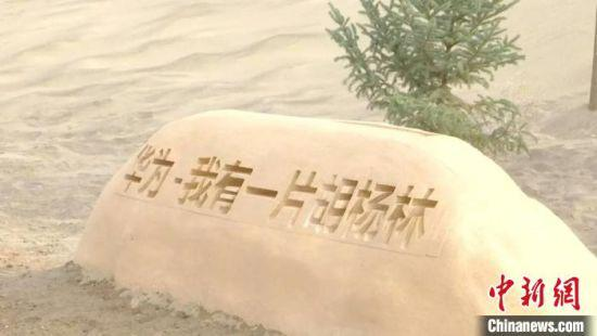 4月中旬,逾6万株胡杨树苗在位于甘肃省河西走廊西端的金塔县完成种植。 金塔县委宣传部供图