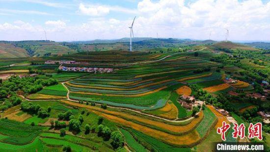 图为盛夏时节,航拍甘肃定西市安定区的梯田宛如一条条绿色丝带,缠绕在黄土高原上。(资料图) 王金生 摄