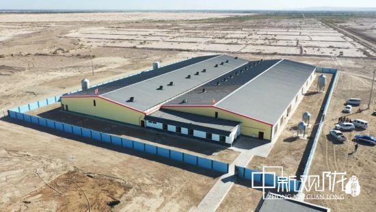 瓜州县德品金麦农业科技发展有限公司的养猪场外景。王翠 摄