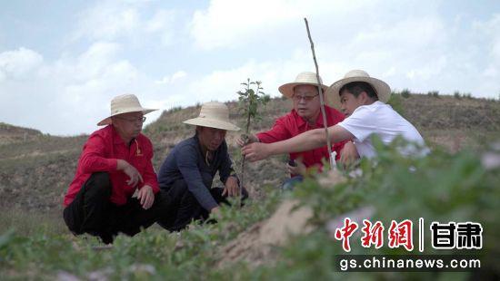 """图为安掌村驻村书记席洪涛与村民一起研究新苹果品种""""瑞阳""""""""瑞雪""""。"""