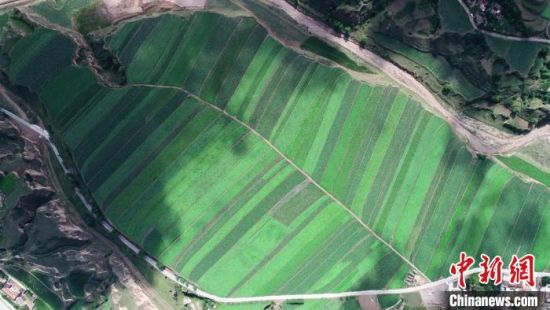 2020年7月,甘肃省定西市安定区境内马铃薯万亩示范片带。图为当地机械化耕作的片区之一。(资料图) 易思耿 摄