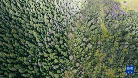 这是9月2日拍摄的则岔石林景区内的森林(无人机照片)。新华社记者 陈斌 摄