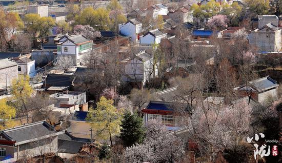 清水镇上的迭马村,隐匿在黄色、粉色、白色的花海中,美不胜收。