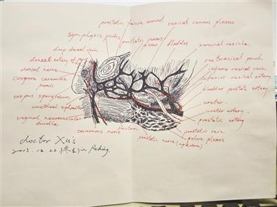 徐国良绘制的外科解剖图