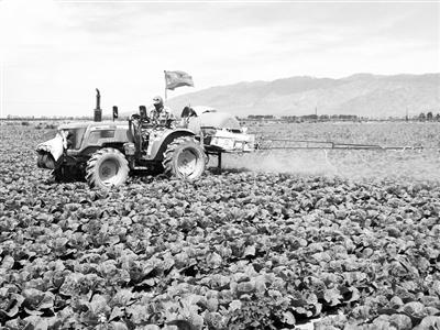 """2017年6月,""""农业工人""""在蔬菜地喷施营养素。"""