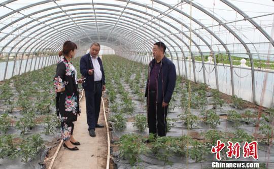 6月6日,农行客户经理陈文山(中)在大棚中与农户进行沟通。 吴鹏 摄