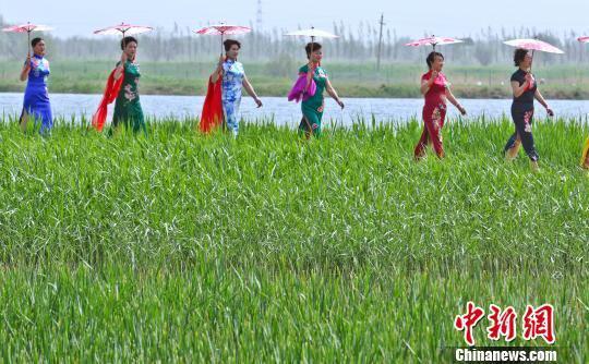 母亲们穿上传统的旗袍穿行在张掖国家湿地保护区内,上演旗袍秀。 王将 摄