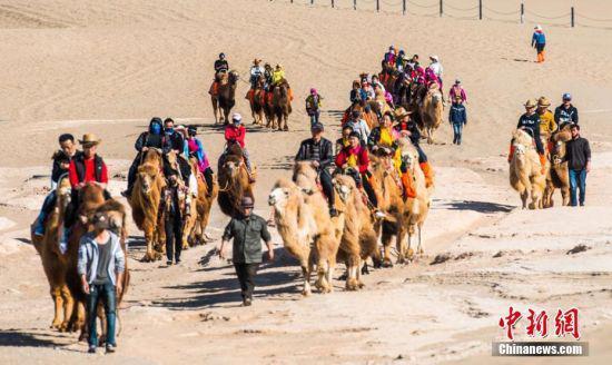 鸣沙山下的大漠驼队。 王斌银 摄