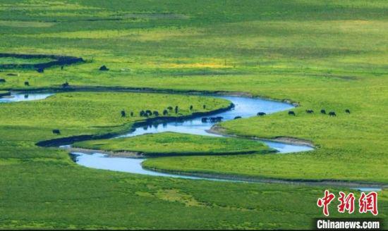 图为黄河流经甘肃甘南藏族自治州玛曲县。(资料图) 甘南州委宣传部供图