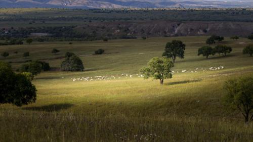 云慢疏林大草原生态观光区