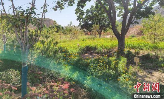 9月中旬,兰州市皋兰县九合镇兰沟村富绿源生态文旅专业合作社兰谷生态园内,绿植葱茏,景色如画。 杨娜 摄