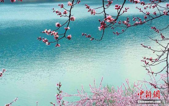 桃花映衬下的弹筝湖。张保勤 摄