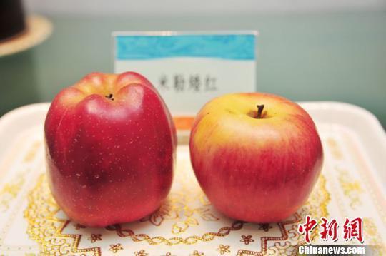 图为老手艺人李树奎所制蜡果。(资料图) 钟欣 摄