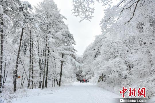 资料图。1月28日,甘肃天水市迎来2018年第三轮降雪。 陈治平 摄