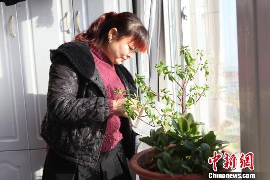 资料图:2017年9月,张亚丽夫妇在无担保的情况下从中国农业银行贷款14万元住进了85平方米的新家。图为张亚丽在新家里浇花。吴锋 摄