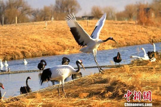 张掖国家湿地公园位于张掖市甘州区城郊北部,与市区紧密相连,是国内离城市最近的湿地公园。 陈礼 摄