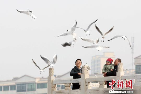 随着天气回暖,红嘴鸥等大批候鸟来到甘肃永靖黄河三峡停歇觅食,吸引游客观赏。 郭红 摄