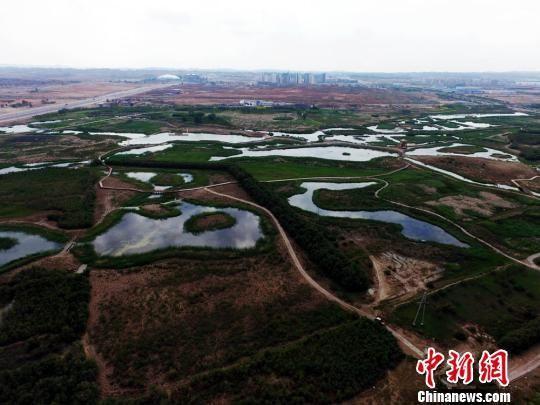 """资料图。图为兰州新区秦王川国家湿地公园,该公园核心区面积约为5000亩的""""生态绿岛"""",也是西部唯一盐沼湿地公园。杨艳敏 摄"""