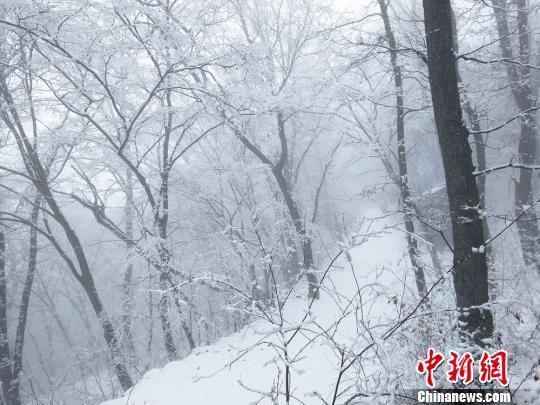 3月6日,甘肃平凉崆峒山景区,雪后漫山银装素裹,云山雾绕。 徐振华 摄