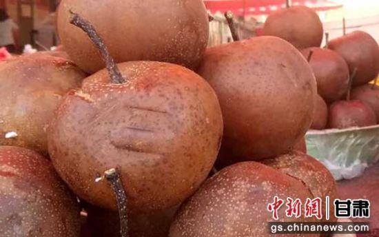 图为软儿梨,呈褐色,有防治风寒感冒等功效。闫姣 摄