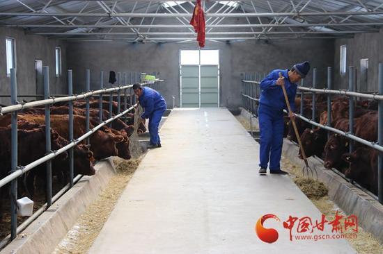 """庄浪县""""平凉红牛""""养殖场"""