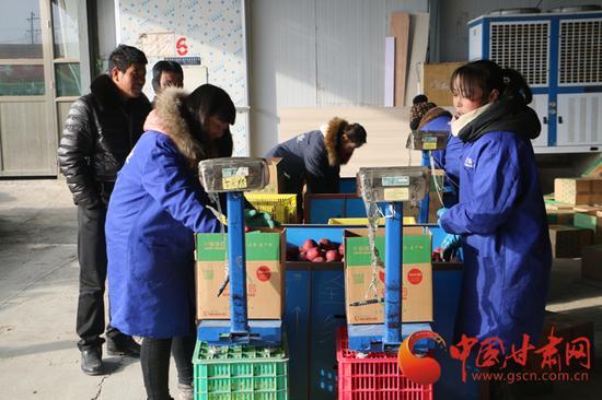 礼县良源果业合作社工人正在装箱过秤