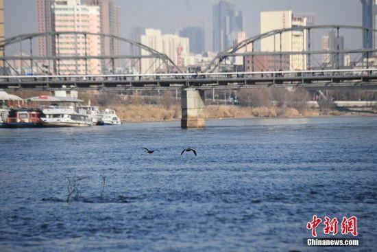 近期,黄河进入枯水期。1月23日,兰州段河水似海水般清澈湛蓝。杨艳敏 摄