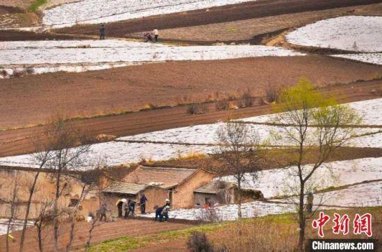 连日来,兰州市榆中县田间地头,成片的白色地膜映入眼帘,随处可见忙碌的身影。