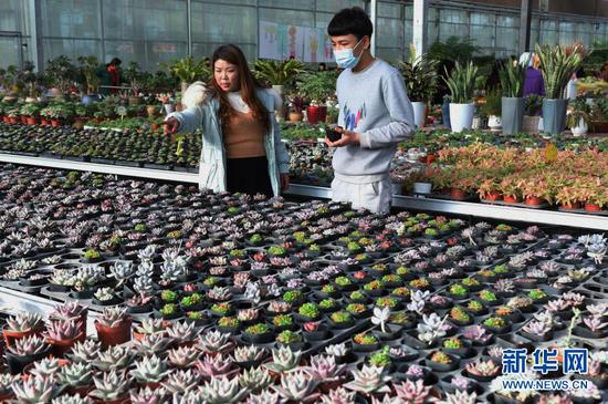 12月21日,顾客在临夏县一农业园区的花卉大棚内选购花卉。新华社发(史有东 摄)