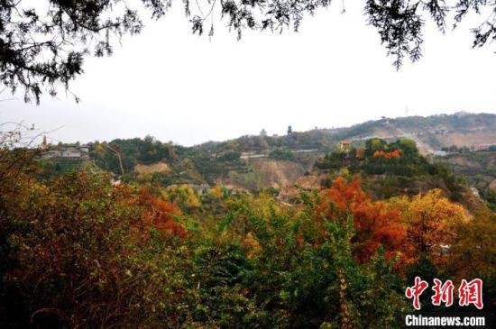 图为兰州市南北两山绿化林一隅的秋景,色彩斑斓。(资料图)兰州市南北两山环境绿化工程指挥部供图
