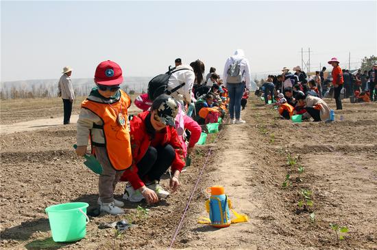 农事活动体验:栽菜苗