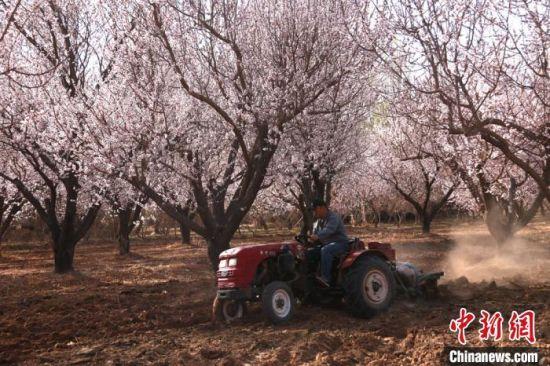 图为农民驾驶农业机械翻地。