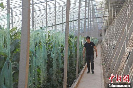 温室大棚里,24岁小伙韩吉明如往常一般忙碌着,回家种地已近一年的他,皮肤晒得黝黑,脸颊有了西北人的高原红。
