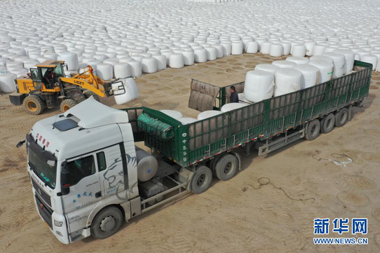 11月17日,在武威金科脉草业有限责任公司,工作人员在装载青贮饲料(无人机照片)。新华社记者 杜哲宇 摄