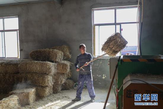 在甘肃省金昌市永昌县赵家庄村养殖小区,村民给牛准备饲草(10月24日摄)。新华社记者 马希平 摄