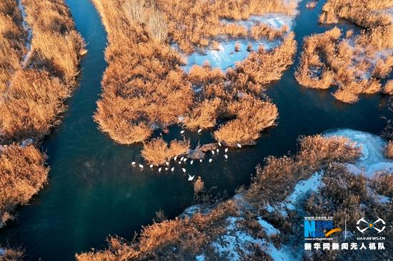 冬日航拍甘肃省张掖国家湿地公园。新华网发(杨永伟 摄)