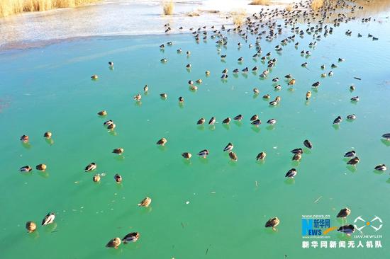 候鸟翔集甘肃省张掖国家湿地公园。新华网发(吴学珍 摄)