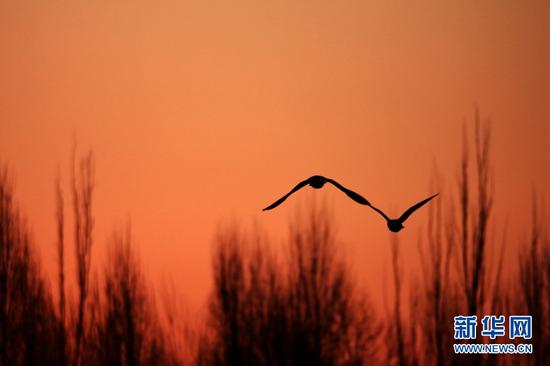 候鸟高飞。新华网发 (成学磊 摄)