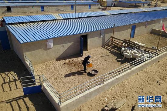 在古浪县黄花滩生态移民区富民新村养殖小区,村民李应川在喂羊(2020年3月10日摄)。新华社记者 范培珅 摄