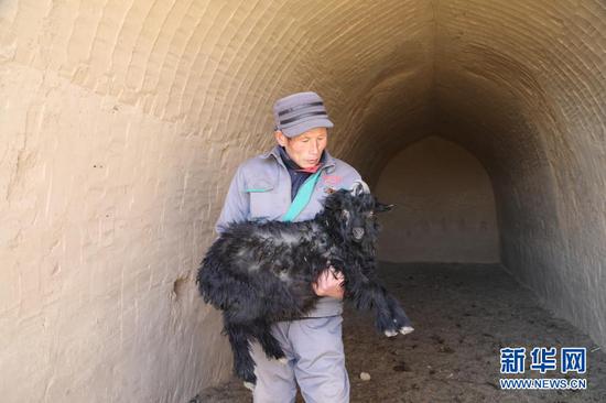 1月21日,在甘肃省庆阳市镇原县方山乡王湾村物宗园姚山黑种羊繁育专业合作社的一处窑洞养殖场内,工作人员任生德抱着一只小羊羔。 新华社记者 马莎 摄