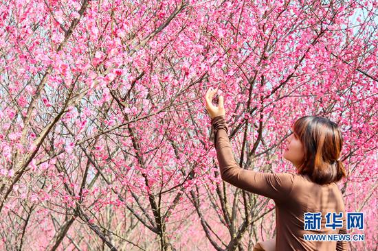 游人在景区赏梅游玩