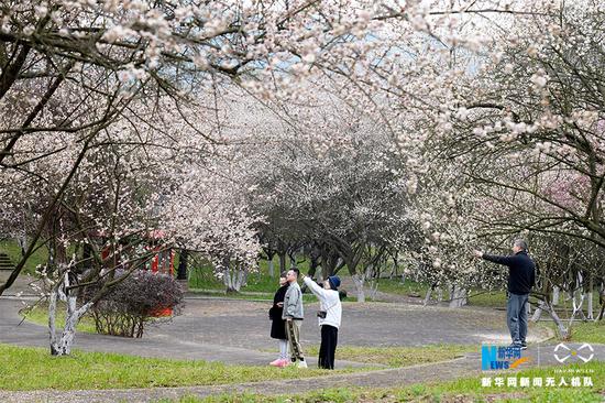 游客在五彩梅园赏花。新华网发(秦廷富 摄)