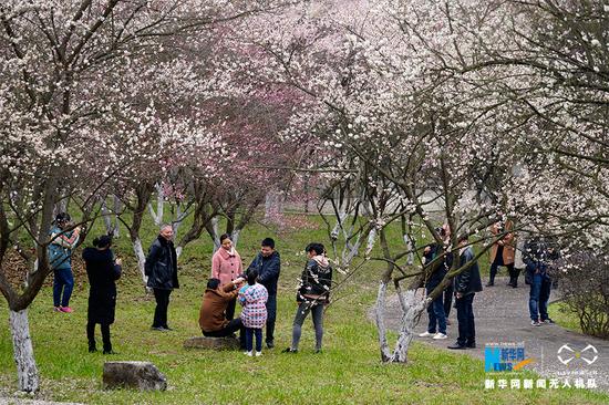 游客在花林下踏青。新华网发(秦廷富 摄)
