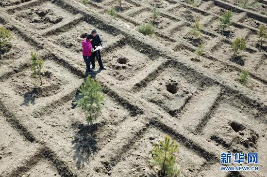 3月11日,在平凉市崆峒区白水镇焦庄村北山,张文玉(左)和同事讨论植树造林细节(无人机照片)。新华社记者 范培珅 摄