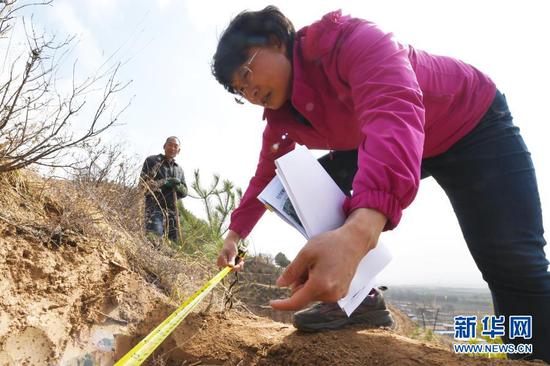 3月11日,在平凉市崆峒区白水镇焦庄村北山,张文玉(右)在造林现场忙碌。新华社记者 范培珅 摄