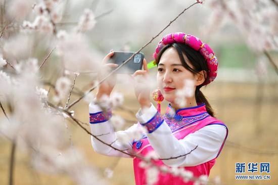 3月29日,一名游客在唐汪镇的杏园内赏花拍照。新华社记者 陈斌 摄