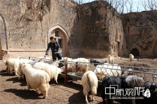 图为路涛喂养绒山羊。
