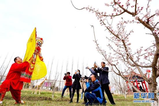 4月3日,非遗传承人在金满园杏园种植基地里为游客表演杖头木偶戏。新华网发(王将 摄)