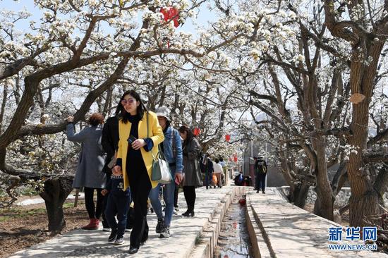 4月5日,游客在皋兰县什川镇古梨园赏花。新华社记者 范培珅 摄